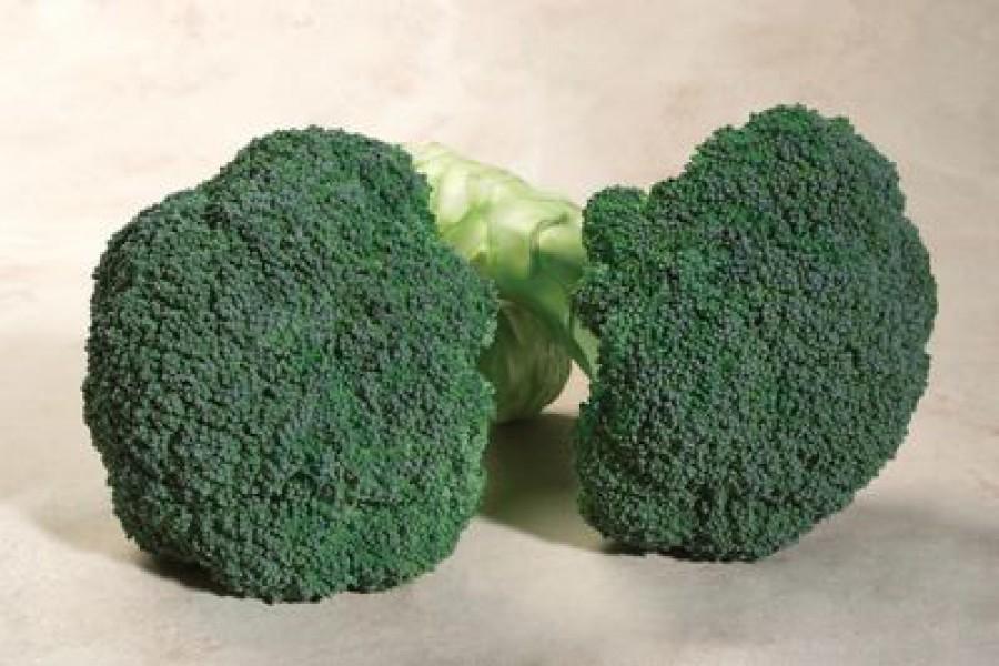 Broccoli S54