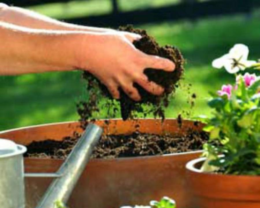 Compost natural din scoarta de conifere