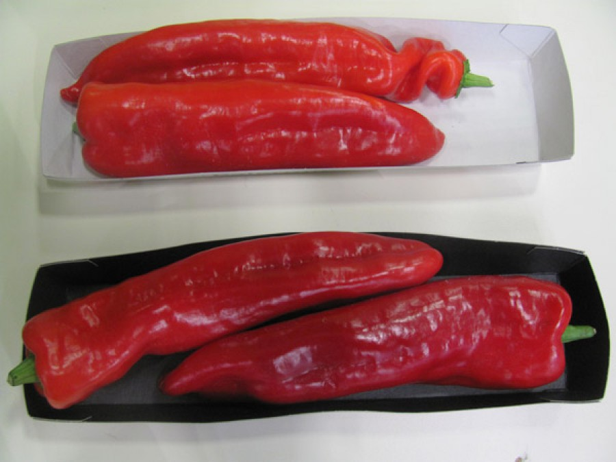 Red hot chilli peper r11